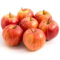 Äpfel 5kg